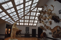 Wonders of Wildlfie National Museum and Aquarium (Adventurer Dustin Holmes) Tags: 2018 wondersofwildlife museum bears room springfieldmo springfieldmissouri exhibit mountainlion