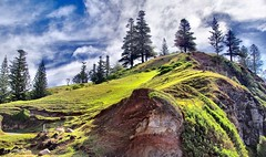 Norfolk Island Beauty (debjohnson3) Tags: island nature skyline sky slope rocks clouds green hills norfolkisland norfolkislandpines pines