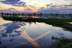 *** (pszcz9) Tags: polska poland przyroda nature natura parknarodowy nationalpark ujściewarty wartamouth woda water odbicie reflection zachódsłońca sunset chmury cloud beautifulearth sony a77 pejzaż landscape