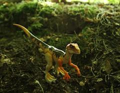 Velociraptor (rodstoybox) Tags: velociraptor velociraptors jurassicpark jurassicworld lostworld jurassic dinosaur dinosaurs mattel toys