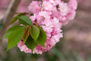 Pretty in Pink (norasphotos4u) Tags: flowersplants trees canonef100400f4556iiusm social canon7dmkii ©noraleonard flickr pink