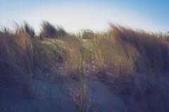 _DSC4706 (Joschka_van_der_Lucht) Tags: balticsee meer ostsee see sommer strand beach gras sand summer sun warnemünde rostock mecklenburgvorpommern deutschland de