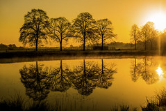 Mirror at Sunrise (metsemakers) Tags: mist tree sunrise water heythuysen middenlimburg thenetherlands sony nex mirror reflectie reflections