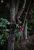 很强的立體感。Depth of Field. (ORANGEREPUBLIC) Tags: photolovers photoshopexpress dreamlikeadream iso100 photoeditor manualfocus blur sonya7r2 mirrorless beautifulbokeh 花の寫真 orangerepublic lonely natural mitakon50mmf095 f095 fullframe