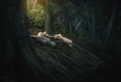 Earthday Fairytale ({jessica drossin}) Tags: jessicadrossin fairytale roots trees girls figures dresses dark magical wwwjessicadrossincom