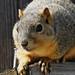 Kemah - Squirrel Close Up