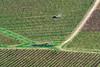 Motovun (Miha Pavlin) Tags: croatia istra motovun perspective above vineyard road countryside farming