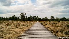 DSC09116 (Lцdо\/іс) Tags: caillebotis path chemin fagnes fagnard hautesfagnes décor brackvenn paysage landscape nature naturelle réserve fens venn venen ardennen ardennes ardenne belgique belgium belgie beauty treking