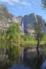Yosemite Falls and Merced River - Morning in Yosemite NP (bhotchkies) Tags: usa california yosemite yosemitevalley yosemitenationalpark nationalpark river mercedriver yosemitefalls waterfall