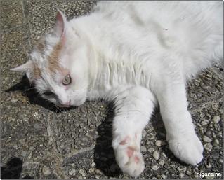 Mouna , qui se dore au soleil , dans son jardin ,  vous souhaite un bon dimanche de Pentecôte