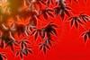 Autumn Glow by Kaye Menner (Kaye Menner) Tags: autumnglow autumn glow redglow orangeglow abstract autumnabstract sunshine leaves autumnleaves fall maple mapleleaves colorful vibrant leaf light sunlight sunshineonmaple silhouette partialsilhouette sunset japanesemaple photography fractal kayemennerphotography kayemenner glowing brightcolors fractalglow tree kayemennerfractals kayemennerleaves white yellow red orange redorange orangered leafart autumnart mapleart