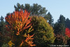 Fall Colors (youngwarrior) Tags: washington stevenson tree fall orange