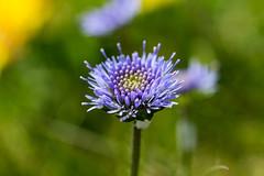 Purple Flower (G_HOWDEN) Tags: