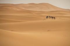 Dunes of Sahara (Milan Smida) Tags: sahara camels camellos dunas berbere milansmida morocco marruecos sur desierto desert magic