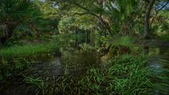 Jungle Scene (justenoughfocus) Tags: sonyalpha florida green landscapephotography myakka reflections trees unitedstates locations myakkacity us