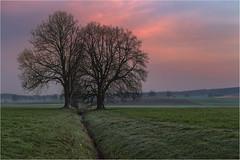 Morgenstimmung (Robbi Metz) Tags: deutschland germany bayern bavaria reischenau augsburgwestlichewälder landscape trees sunrise forest colors canoneos