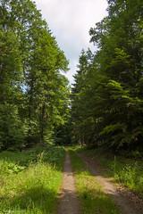 Omgeving Erntehof (Neidenbach) (Walk 3680) Tags: allemagne bitburg deutschland duitsland eifel erntehof europa europe germany kontaktgroepbree kyllburg nrw neidenbach neuheilenbach noordrijnwestfalen nordrheinwestfalen rheinlandpfalz rijnlandpalts vakanties vulkaaneifel wandelingen wanderunge3e2n1 d50 lente middengebergte nikon routee3e2n1 spring wandelen