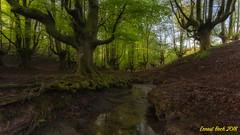 The Magic forest. (Ernest Bech) Tags: euskadi bosc bosque forest arbre arboles trees river riu primavera spring hayedo
