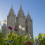Spring Flowers on Temple Square thumbnail