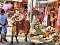 """Hello cow""! (jillrowlandwv) Tags: colorful kathmandu nepal travel tourism animal street city business sidewalk child"