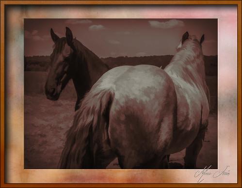 Puttelange 2018 05 - 025 lr-Tpz hd chevaux
