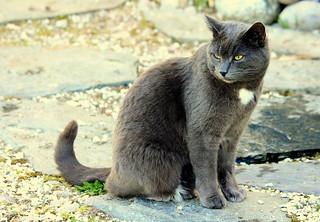 Niilo-cat..