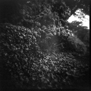 front yard embankment, ivy, sapling, near dusk, West Asheville, North Carolina, Diana F+, Kodak TMAX 400, Ilford Ilfosol 3 developer, 5.7.18