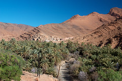 Canyon d'Aït Mansour (Voyages Lambert) Tags: antiatlas casbah day green landscape morocco mountain nopeople northafrica oasis outdoors palmtree ravine tafraoute town travel valley village bluesky
