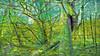 20180402_163720_l (wos---art) Tags: bildschichten wald sträucher bäume äste fusweg wildwuchs natur natürlich gewachsen