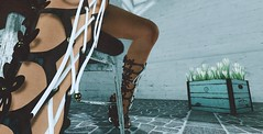 Little details (Laura a surprise package in the kink department) Tags: cosmopolitan keke azoury heels crocus