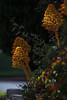 ILCE-7M2-07571-20180423-1748 // Canon FD 300mm 1:4L (Otattemita) Tags: 300mmf4 canonfd canonfd300mmf4l canonfdn canonnewfd canonnfd florafauna fauna flora flower nature plant wildlife canonfd300mm14l sony sonyilce7m2 ilce7m2 300mm
