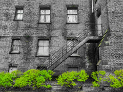 Physical Graffiti (michaelwalker19) Tags: urban decay selectivecolor green staircase abandoned downtowncleveland