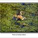 Andreas Kalbow Erdkröte Bufo bufo 2018.04.07 Große Torfmoor (5)