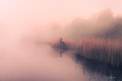 The early bird catches the... Fish? (Geoff Moore UK) Tags: mistylakes sunriseglow water pools naturereserve willowheron birdsculpture morningsunrise reflections pershorewetlands pershorenaturereserve