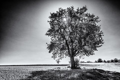 Landmark... (New Views VII) (Ody on the mount) Tags: anlässe bäume em5ii felder landschaft mzuiko918 omd olympus pflanzen schwäbischealb sonne wanderung bw landscape monochrome sw sun tree