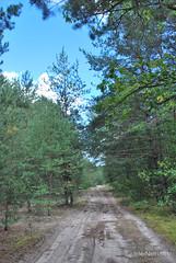 Волинський ліс Лісова дорога InterNetri Ukraine 1698312798