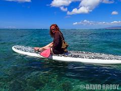 P9090288 (dbrodsky9) Tags: honolulu hawaii unitedstates us