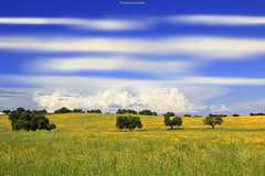 Campo andaluz - Andalusian countryside  # 01 (ricardocarmonafdez) Tags: andalucía sevilla campo countryside field color blue yellow spring cielo sky nubes clouds green sunlight arboles trees 60d 1785isusm canon naturaleza nature