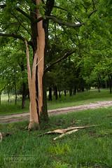 DSC_8206 (Michael Fienen) Tags: country lightning lightningstrike tree