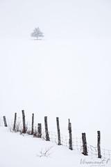 Seul derrière la clôture (Véronimot) Tags: charlevoix neige clôture campagne