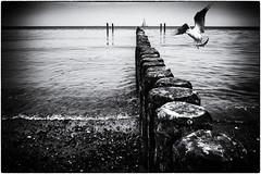 ready to land (ingrid.lowis) Tags: nienhagen ostsee baltic sea monochrom bw schwarz weis strand beach