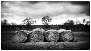 Hey! Here are some Hay Bales