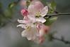 Spring and Life (oskaybatur) Tags: nature spring life 2018 oskaybatur türkiye turkey turkei april nisan ilkbahar pentaxk3 pentaxart justpentax dof bokeh pink smcpentaxdal55300mmf458ed vize balkaya kırklareli