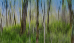 Springtime in the Woods (imagebyTerri) Tags: abstract verticalpanning icm woods blue green trees grass silhouettes canon imagebyterri blur motion motionblur