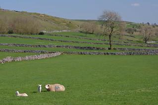 86 & 84, Priestcliffe, Peak District National Park, Derbyshire Dales, England.