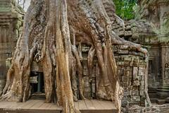 Ta Prohm Temple 1 (EXPLORED) (catoledo) Tags: 2018 cambodia siemreap taprohmtemple krongsiemreap siemreapprovince kh