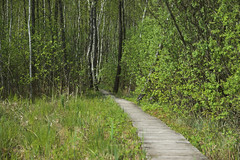 IMGP14118 (Łukasz Z.) Tags: poleskiparknarodowy nationalpark sigma1750mmf28exdchsm pentaxk3 starezaucze lubelskie rzeczpospolitapolska