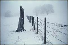 divided we fall (steve-jack) Tags: nikon f5 50mm cinestill 800 tungsten film tetenal c41 kit buntingford herts hertfordshire snow winter epson v500