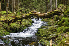 White Opava (tomas.jezek) Tags: river water waterfall bridge tree forest nationalpark whiteopava bilaopava jeseniky czechia land nature old wilderness
