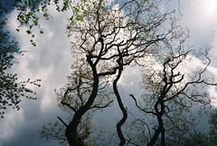 Spring trees, Leigh Woods (knautia) Tags: stokeleighcamp leighwoods bristol england uk may 2018 film ishootfilm olympus xa2 fuji superia 400iso olympusxa2 nxa2roll9 nationaltrust ironage fort ironagefort woods trees myfavouritefromtheroll
